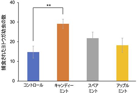 キャンディミントの香りが益虫を誘引することを東京理科大学が発見。環境保全型の有機農法への活用も期待。