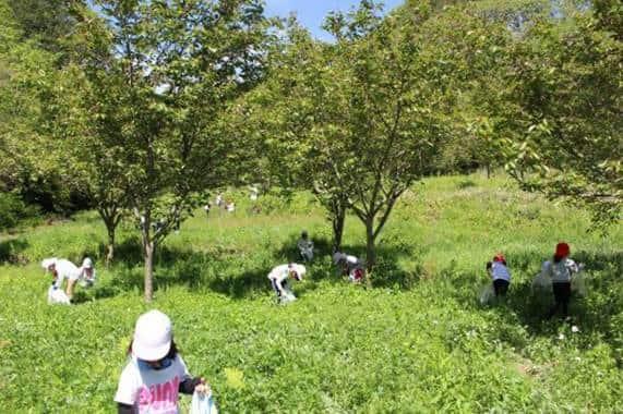 昭和40年代ころまで新潟県に根付いていた「ヨモギ文庫」を復活させるプロジェクト開始。「ヨモギ」と「新潟」の関係性は深いことがわかりました。