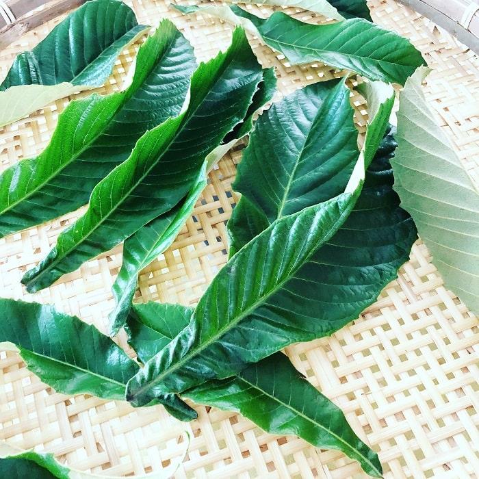 枇杷(びわ)の葉を頂いたことをきっかけに、枇杷の葉の活用方法について調べてみました。