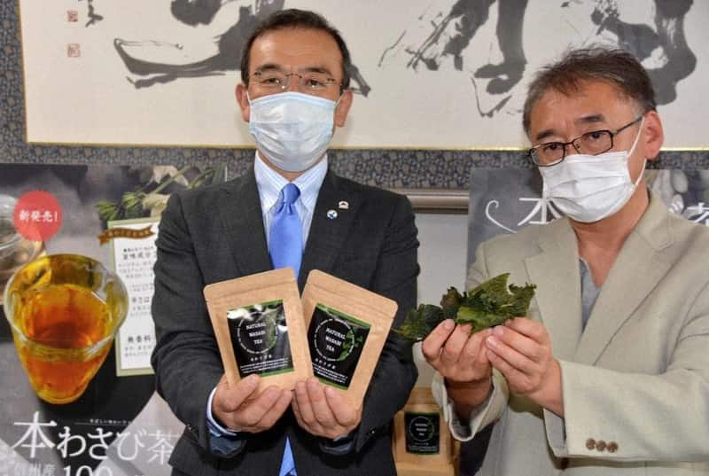 """長野県の""""産""""と""""学""""で開発した、ワサビの葉を活用した「本わさび茶」が気になります。"""