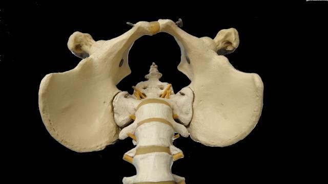 中医学・養生法の専門家が語る「骨」と「腎」の関係。腎機能低下は老化と密接に関わっているようです。