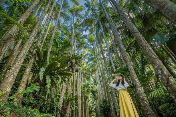 沖縄にある日本最大級の屋外植物園『東南植物楽園』とはどんなところなのか。