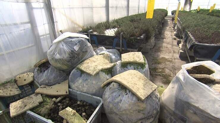 """""""ハーブ大量処分""""をせざるを得ない奈良県のハーブ農家の言葉から感じたこと"""