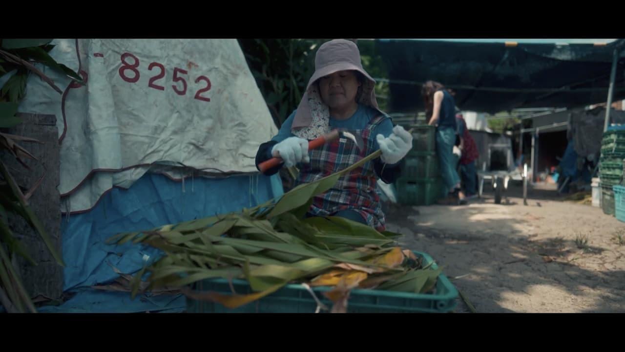 植物採集家による沖縄の月桃農場(日本月桃(株)運営)の訪問ストーリー。沖縄に根付く月桃文化の魅力が伝わります。