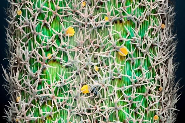 電子顕微鏡でみるローズマリー・ラベンダー・セージ・バジル・サフランの世界。視覚を通して効能の理解が深まることがわかりました。