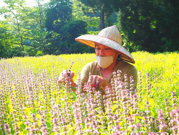 ハーブの香りを巡る旅レポートを見て、「新潟県・十日町市」に魅力を感じました。