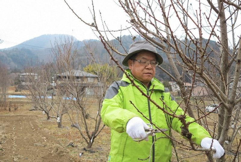 遊休農地を桃林に変える「桃源郷プロジェクト」 (山梨県大月)。「薬用としての桃」の視点が無かったことに気付きました。