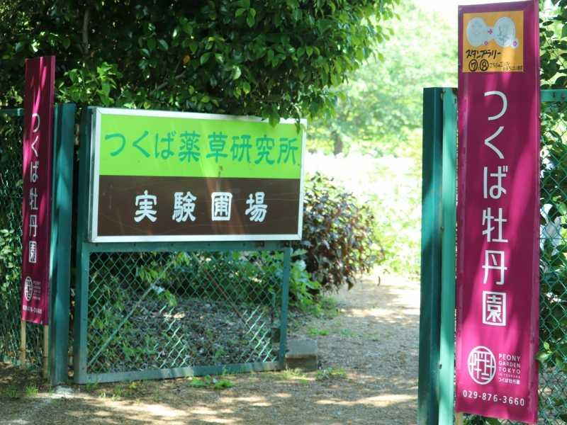 牡丹と芍薬の「つくば牡丹園」の期間限定園内がとても魅力的です。