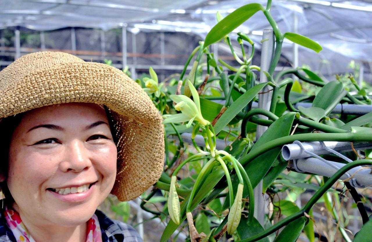 久米島でバニラ特産化の動き。国産バニラが意外に盛り上がっているようです。